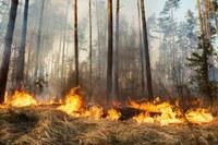 Соблюдение требований пожарной безопасности в лесах.